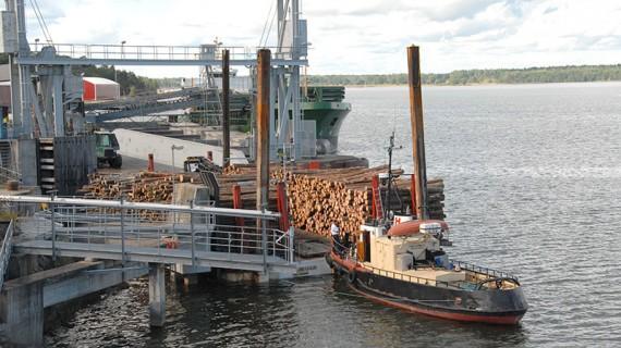 Ännu ett timmerlass har anlänt till Hargshamn. Tio lastbilar med släp behövs för att tömma pontonen.