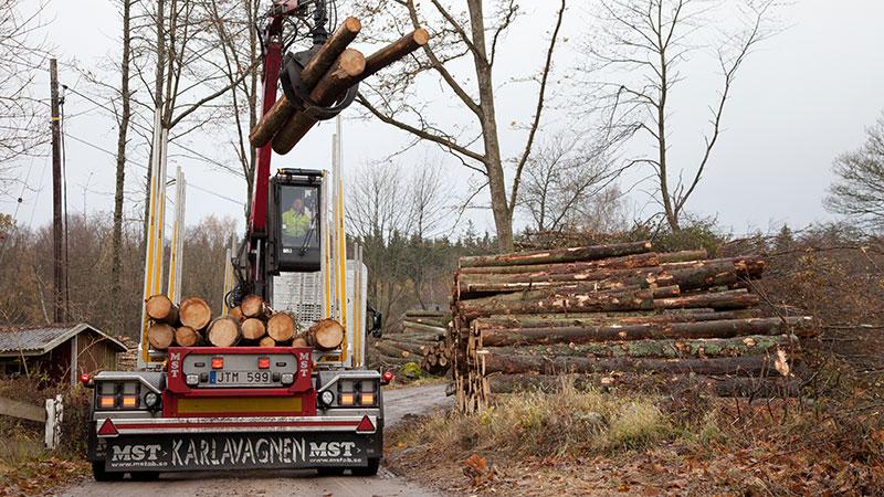Dagens lass av grantimmer ska levereras till Jarl Timber i Broakulla.