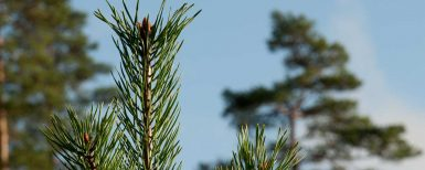 Rapport om luftföroreningarnas effekter i skogen