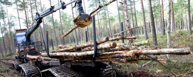 Magnus maskin väger lätt i skogen