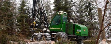 Mycket skador i skogen
