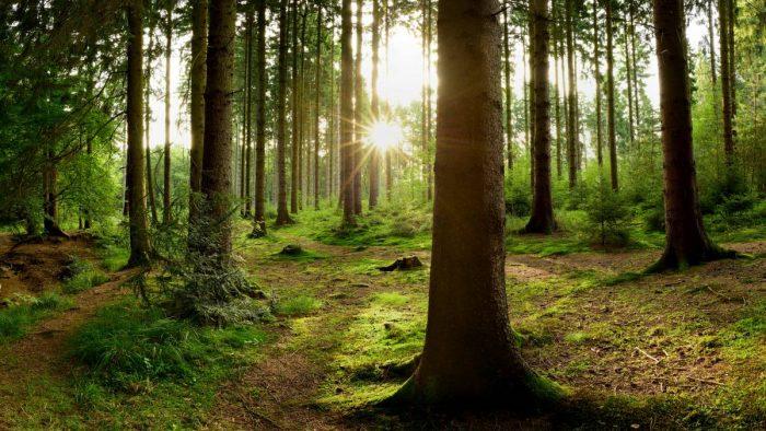 Vi gillar klimatsmarta skogsprodukter