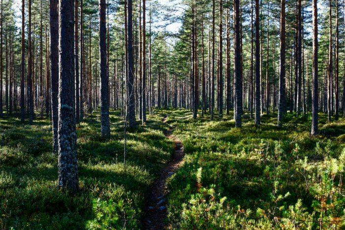 Rekordhöga priser på skogsmark