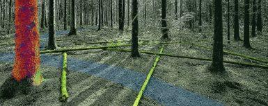 Forskningsprogram banar väg för robotik i skogen