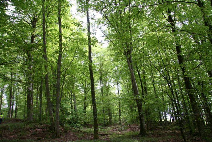 Skogsbranschen kraftsamlar