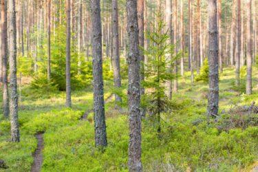 Skogsbruket en nyckelspelare i miljöarbetet