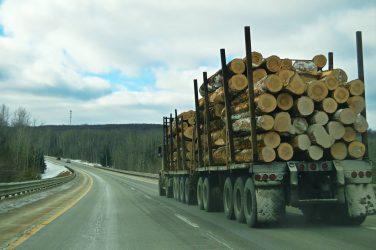 Både ökade kostnader och intäkter i skogsbruket