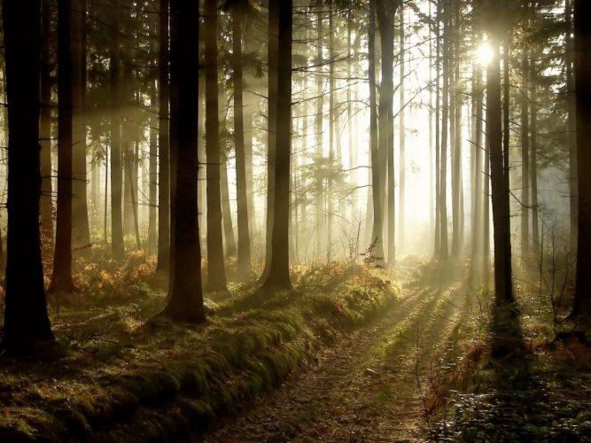 Priset på skogsfastigheter väntas öka
