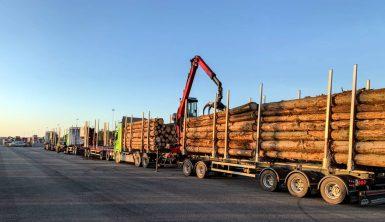 Stora utmaningar efter nya barkborreangrepp