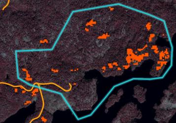 Holmen erbjuder virkesleverantörer karta över granbarkborreskador
