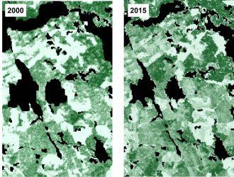 Yttäckande rasterkartor över Sveriges trädslag i SLU Skogskarta