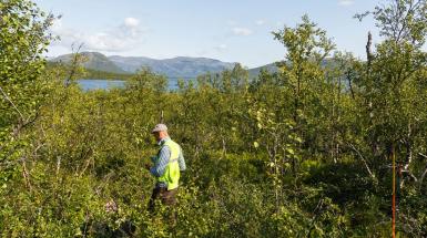Ny data från fjällskogen gör skogsstatistiken komplett