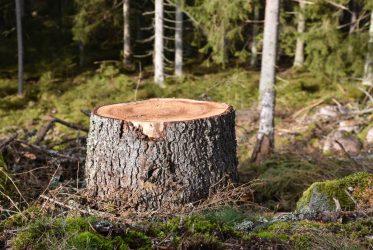 Förnybar bioolja av sågspån